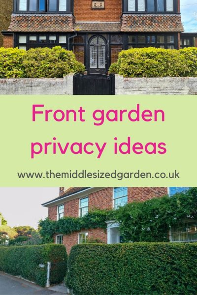 Hedges for front garden privacy
