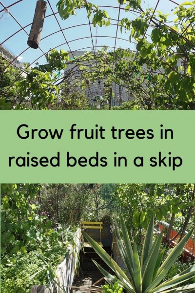How to grow fruit and vegetables in a skip