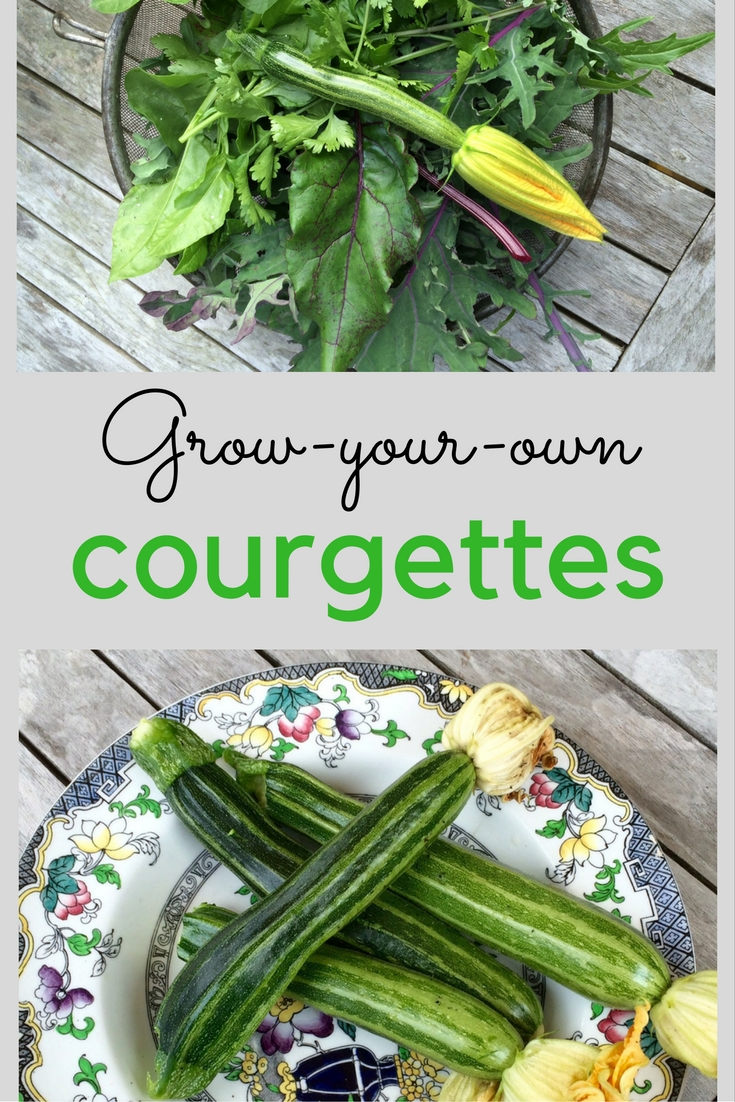 Grow-your-own courgette growing tips
