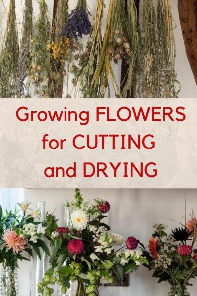 Growing cut flowers in your garden