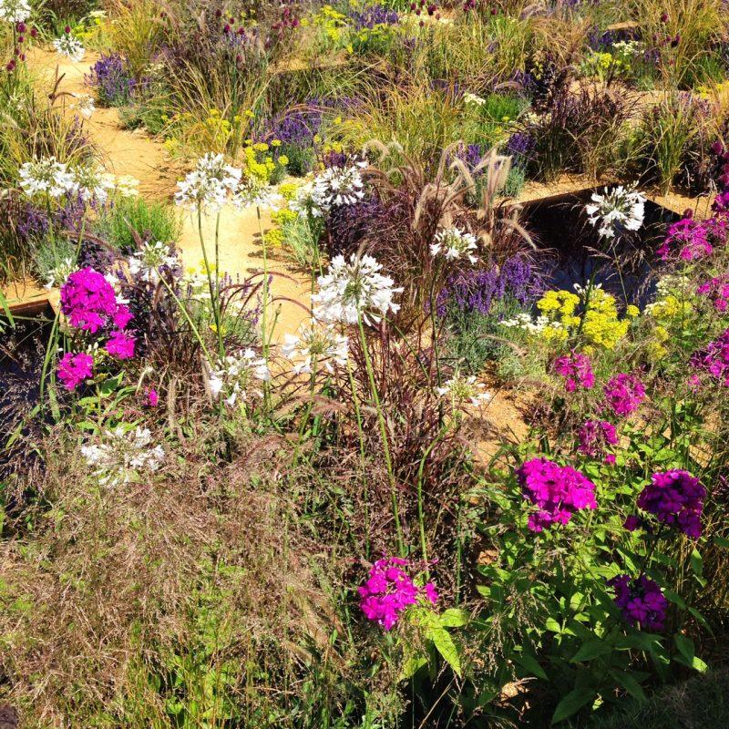 One Show garden planting