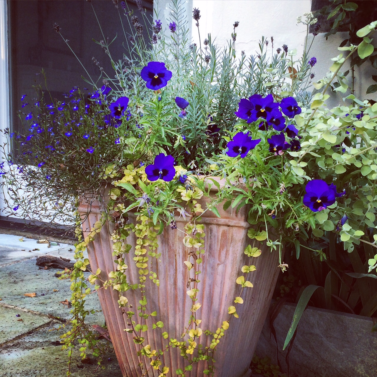 Your Best Garden Pots Ever 6 Tips For Brilliant