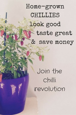 Join the chilli revolution