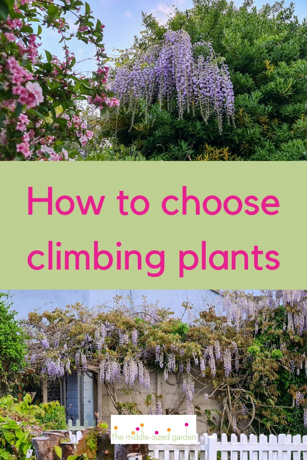 How To Choose The Best Climbing Plant For Your Garden The Middle Sized Garden Gardening Blog
