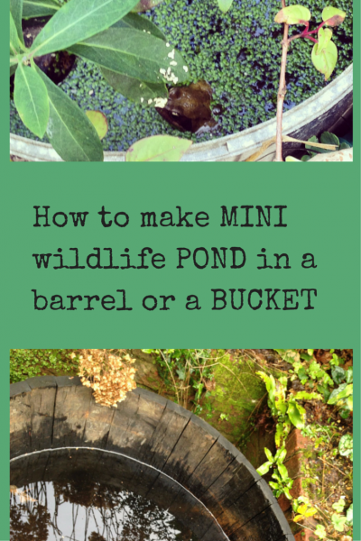how to make a mini wildlife pond