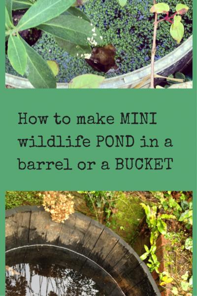 mini wildlife ponds