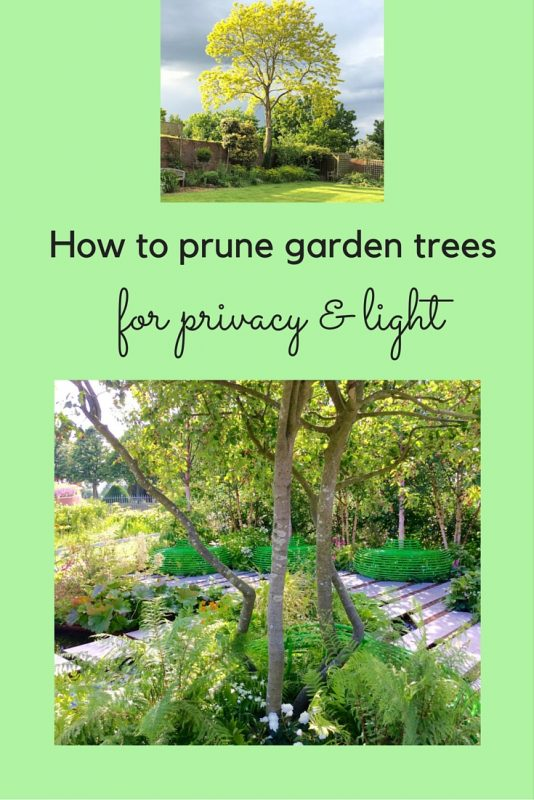 How to prune garden trees for privacy and light