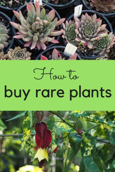 How to buy rare plants