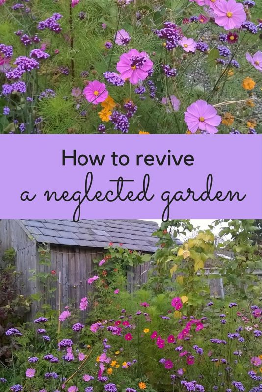 Use seeds as a cheap, easy way to revive your garden #gardenrenovation