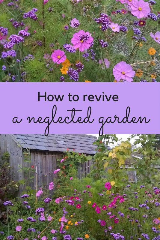 Use seeds as a cheap, easy way to revive your garden #gardenrenovation