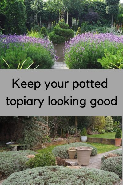 How to root prune your potted topiary - and why it matters