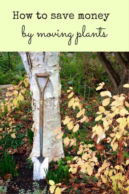 Money-saving gardening tips