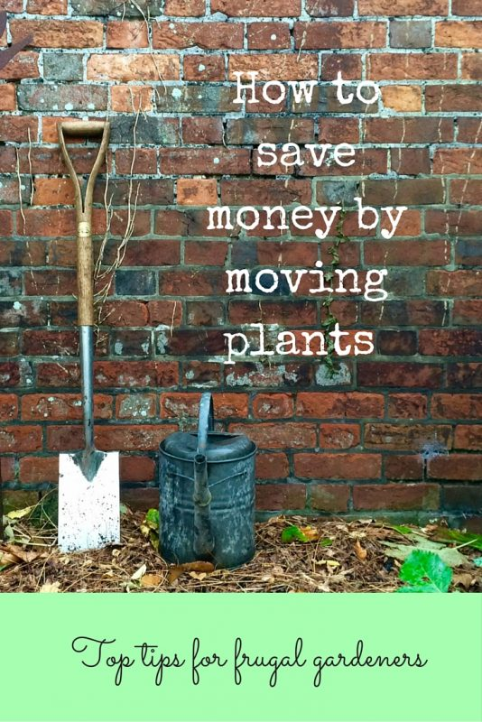 Create stunning effects by moving plants round your garden rather than buying new ones