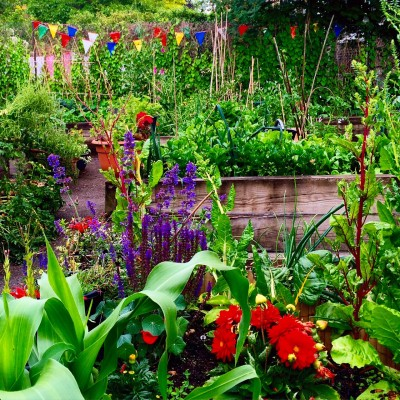 Find out how to be part of a community garden.