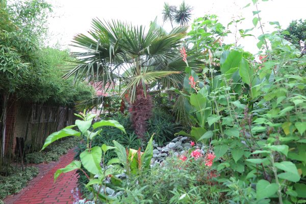 Th exotic garden at the Salutation in Sandwich.