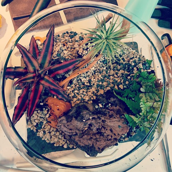 Terrarium on Instagram