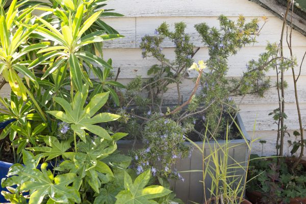 Experiment with cheap and common plants