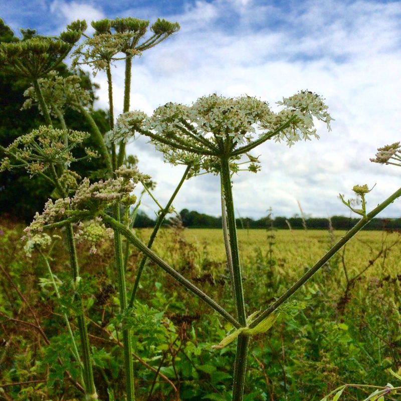Look at what grows naturally when planning a country garden