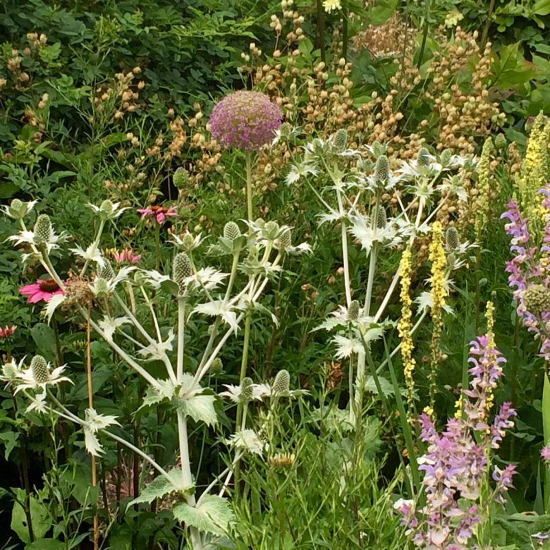 Look at the shape and structure of local plants when planning a country garden