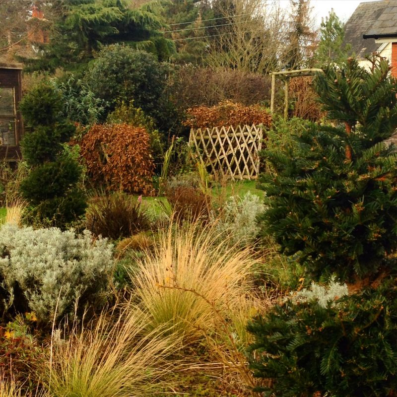 How to have a beautiful country garden