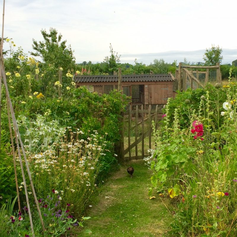 See our 10 tips for an idyllic country garden on a budget