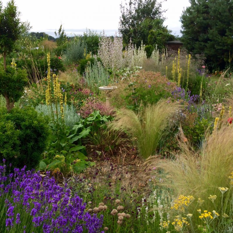Use low and high hedges as a wind-break in country gardens