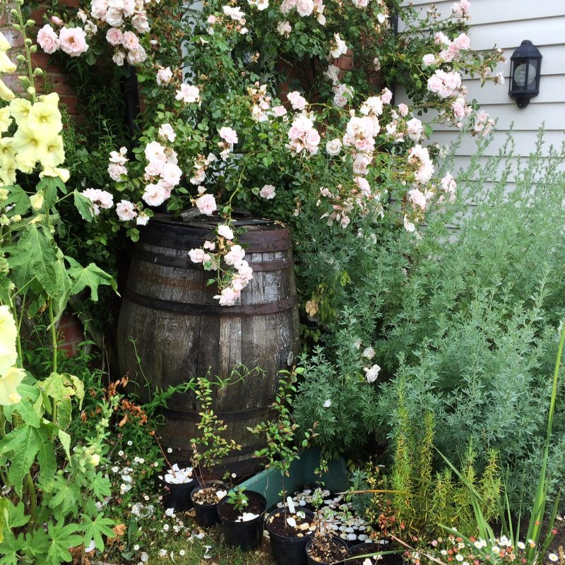 Tips for creating a romantic country garden