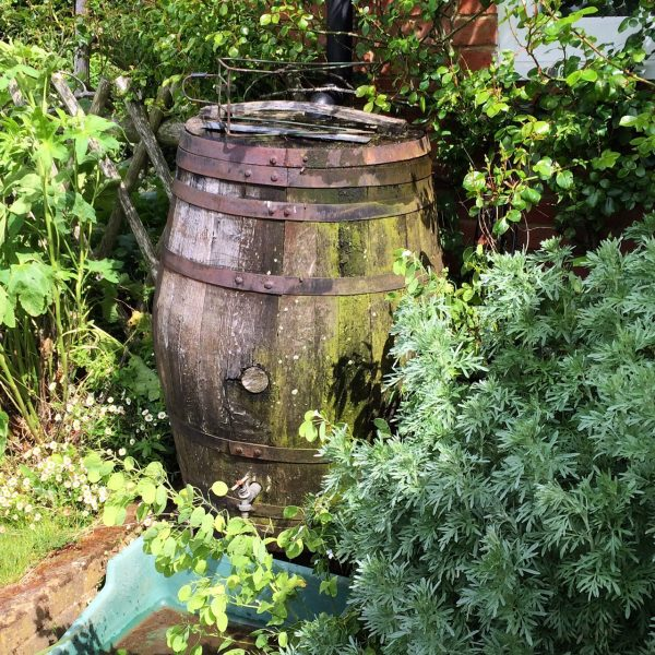 Water butts help save water in 'green' gardening