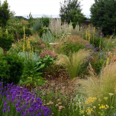 Grasses, evergreens and perennials are all good for time-poor gardeners