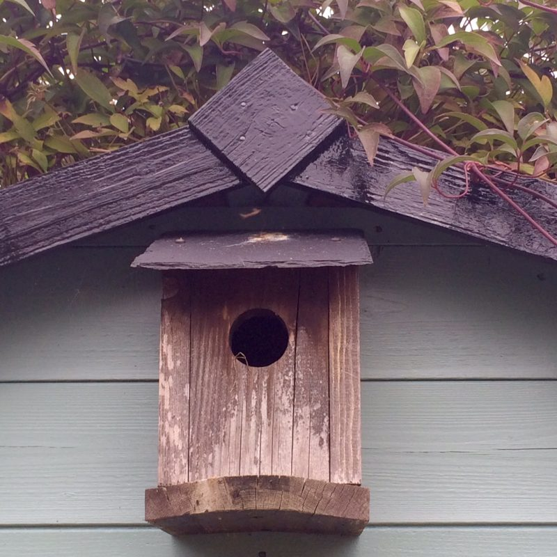 A bird box makes a charming addition to a shed.