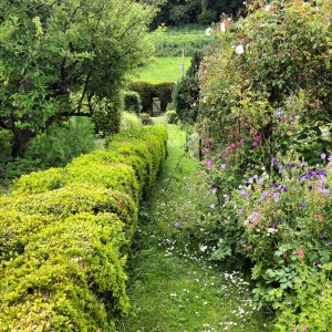 Mown path at Littlebredy Walled Garden