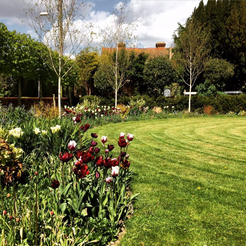A contemporary planting of silver birches and pleached hornbeam in a traditional country garden