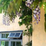 Windows toning with wisteria