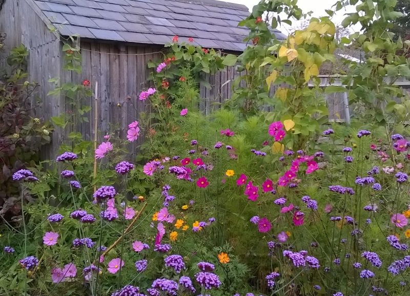Easy to grow annuals are a cheap and easy way to revive your garden almost instantly