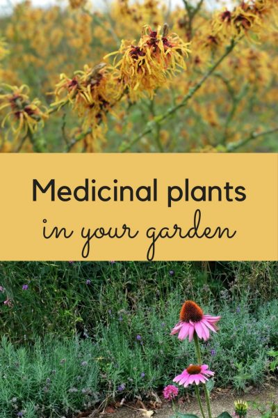 You could grow many useful medicinal plants in your garden