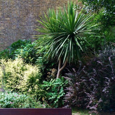 You can improve your air quality by having more plants near your house
