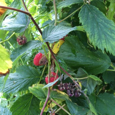 Grow fruit and vegetables in community gardens