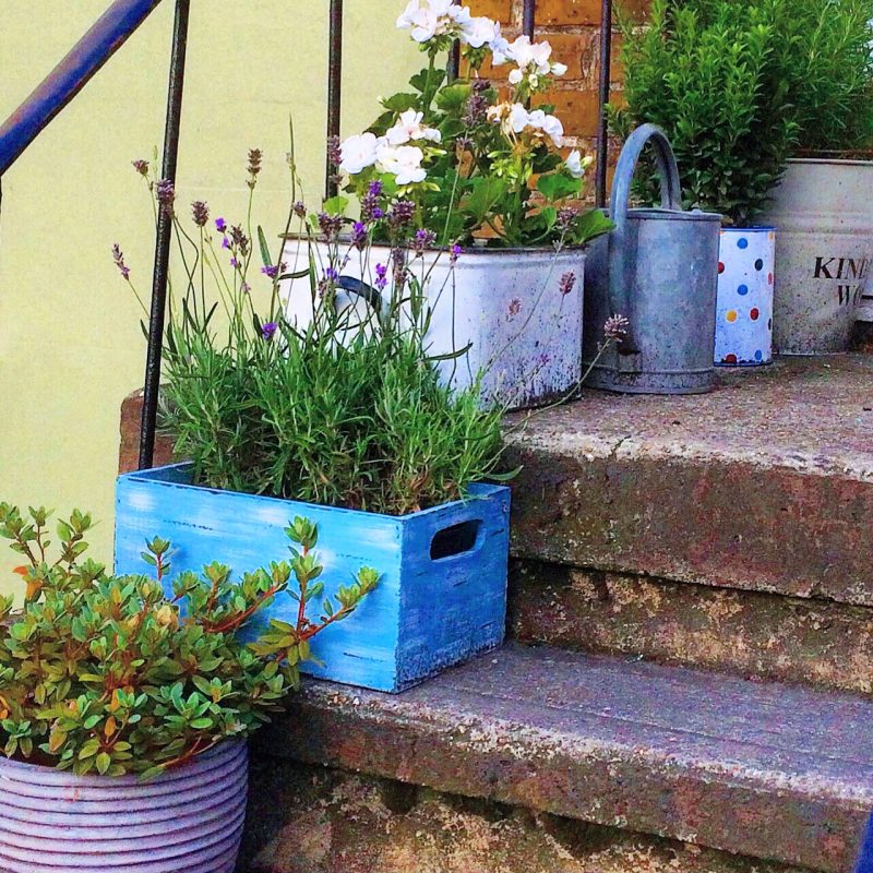 Upcycle crates and buckets for container planting.