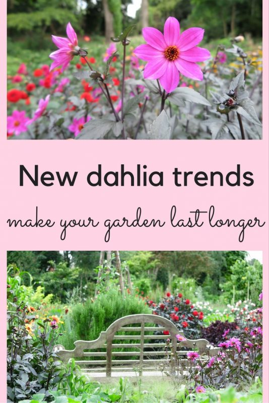 Design ideas and tips - dahlias for contemporary gardens