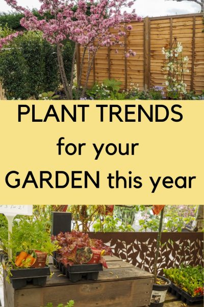 The top plant trends for your garden 2019