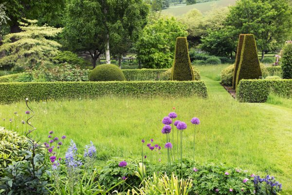 Think about hedging contrasts when choosing which hedge is right for your garden