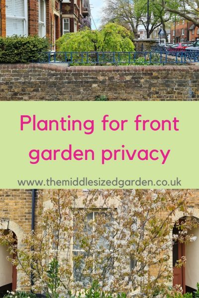 Planting for front garden privacy