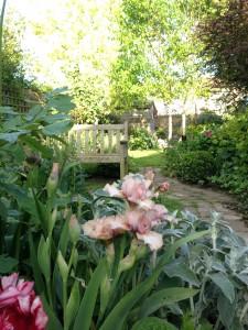 Vintage garden with stachys