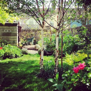 middle of garden posy gentles