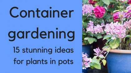Container gardening - 15 beautiful ideas for plants in pots
