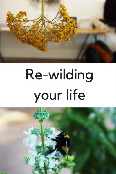 What is 're-wilding' and why does it matter to you? #rewilding