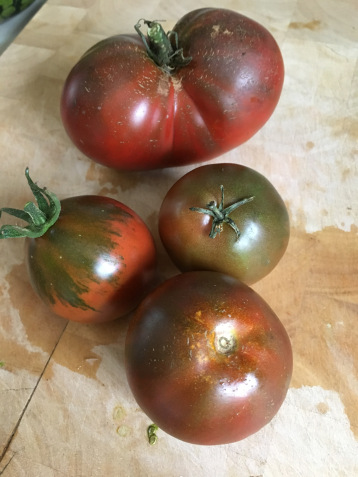 Best tomato variety to grow