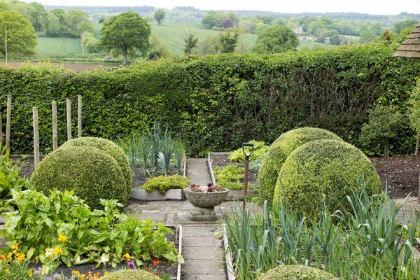Hedges to shelter a veg patch