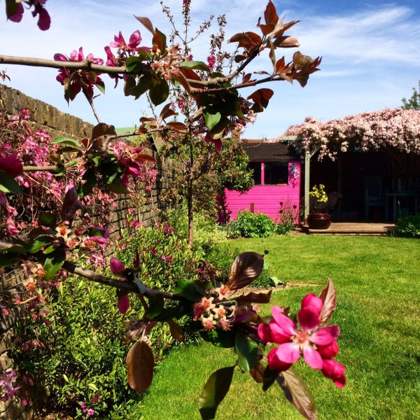 Pink crab apple blossom with a pink shed