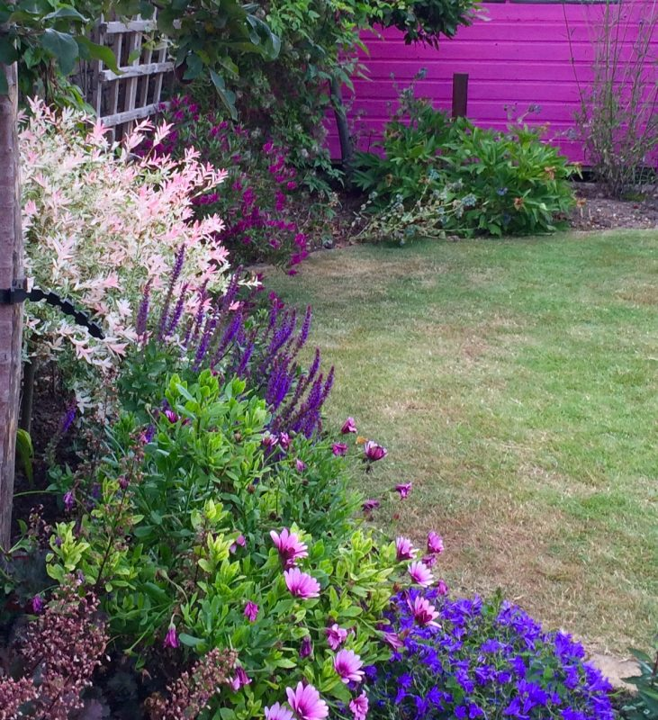 If you have a small-ish garden, then remember that your shed colour will affect your planting